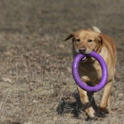 Пуллер для собаки