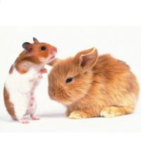 Товары для грызунов и других мелких животных