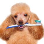 Средства для ухода за зубами, ушками и глазами